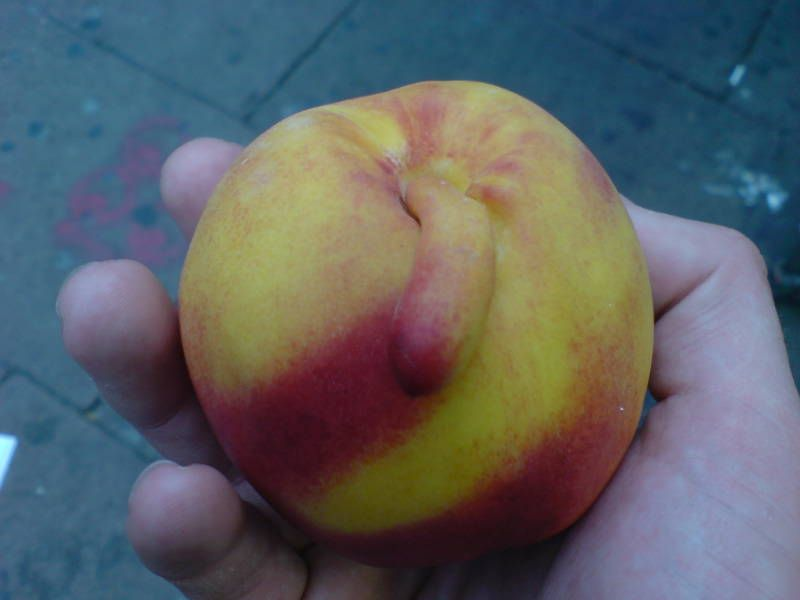 Suggestive nectarine